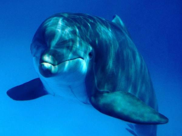 Deep_Sea_3D_-_Curiosity_of_the_dolphin