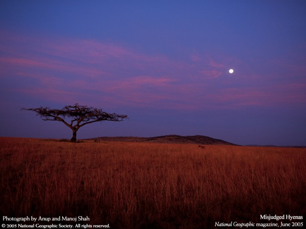 savana-africana-wallpaper-24039