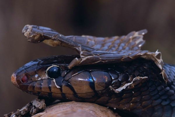 muta-serpente1