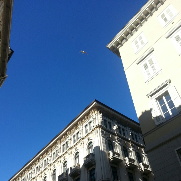 Cielo di Trieste