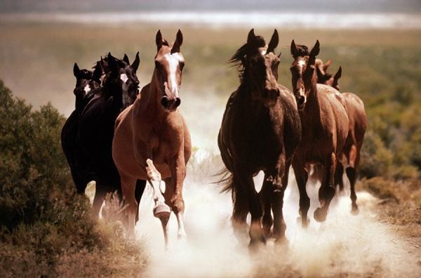 cavalos_a_galope