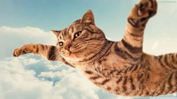 clouds-sky-flying-cat_2030