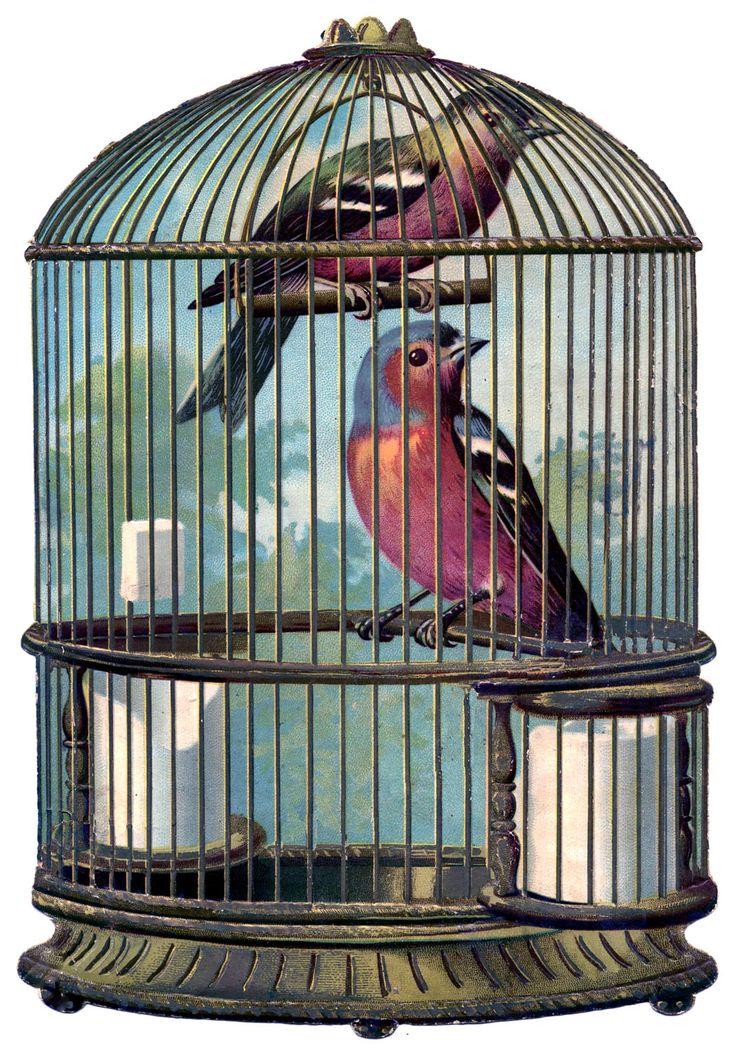 15652cc566dc280a55e2f506d990a23d--vintage-bird-cages-vintage-birds